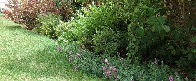 weigele, potentilla, deutzia, salvia, ecc.